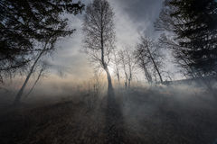 Forest fire. Fire in the mixed wood forest Stock Photo