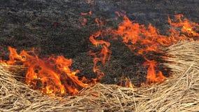 Forest Fire na natureza filme