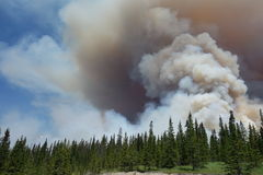 A forest fire in a national park Stock Images