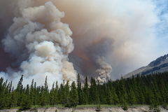 A forest fire in a national park royalty free stock photo