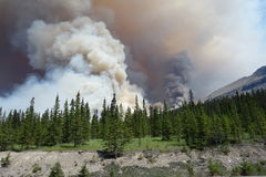 A forest fire in a national park Stock Photography