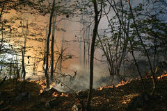Forest fire Stock Photos