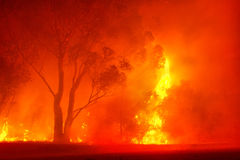 Forest fire in night royalty free stock images