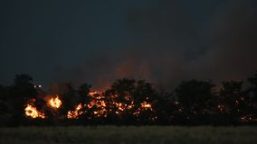 Forest fire at night. Burning trees, fire and smoke at night against dark sky stock video