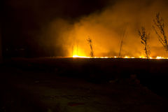 Forest fire at night Royalty Free Stock Images
