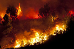 Forest Fire. In Portugal, Europe Stock Images