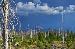 Forest fire recovery Stock Images