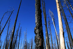 Forest fire remains Stock Image