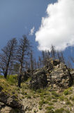 Forest Fire Remains Royalty Free Stock Photo