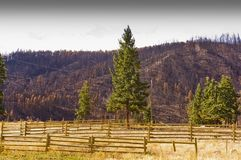Forest Fire Remains On A Ranch Royalty Free Stock Photography