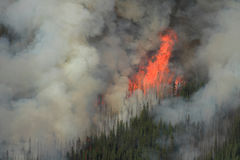 Forest Fire in the Rocky Mountains 02. Huge flames burning on a ridge in the Rocky Mountains Stock Photo