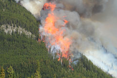 Forest Fire in the Rocky Mountains 02. Huge flames burning on a ridge in the Rocky Mountains Stock Images