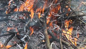 Forest fire, the sight of burning branches stock video footage