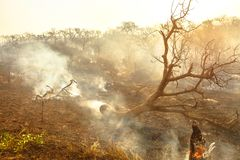 Forest fire with smoke royalty free stock photos