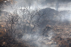 Forest fire smoke Royalty Free Stock Photo