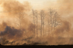 Forest in fire with smoke Royalty Free Stock Photo
