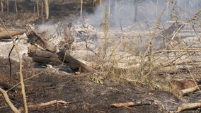 Forest fire, smoke, burnt trees, vegetation and ground. Wind swirls smoke stock video footage