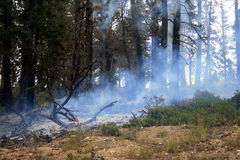 Forest fire starting Royalty Free Stock Photography