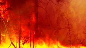 The forest fire is strong royalty free stock photography