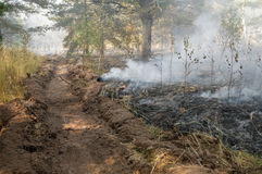Forest fire in the summer. Fire barrier strip in the forest Stock Images