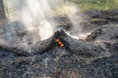 Forest fire in the summer. Fire barrier strip in the forest Stock Photo