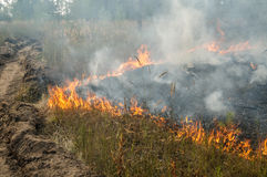 Forest fire in the summer. Fire barrier strip in the forest Royalty Free Stock Image