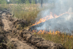 Forest fire in the summer. Fire barrier strip in the forest Royalty Free Stock Photos