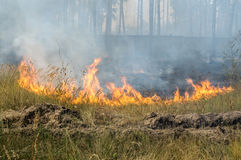 Forest fire in the summer Royalty Free Stock Image