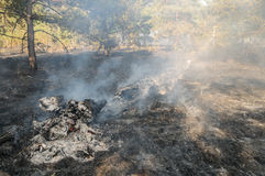 Forest fire in the summer. Burnt forest after passing the front of the fire Royalty Free Stock Image