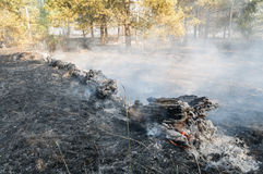 Forest fire in the summer Stock Image
