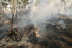Forest fire in the summer Royalty Free Stock Images