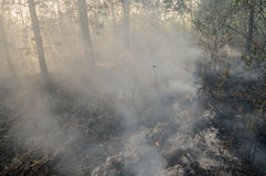 Forest fire in the summer. Burnt forest after passing the front of the fire Stock Image