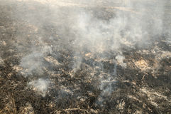 Forest fire in the summer Stock Photography