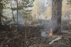Forest fire in the summer Stock Images