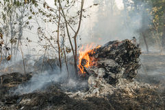 Forest fire in the summer Stock Photos