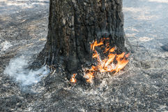 Forest fire in the summer. Charred trunks of trees in a forest after a fire Royalty Free Stock Photography