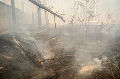 Forest fire in the summer. Fire in the forest with a concrete fence Royalty Free Stock Photography
