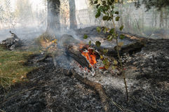 Forest fire in the summer. Fire in the forest with a concrete fence Royalty Free Stock Photo