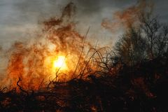 Forest fire and sun. Forest fire flames and smoke backlit by sun Stock Photo
