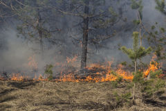Forest fire and sun Royalty Free Stock Images