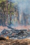 Forest Fire Tokai Royalty Free Stock Images