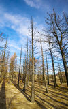 Forest Fire Trees Stock Images