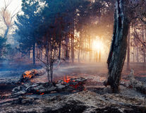 Forest fire. Using firebreak for stoping wildfire. Forest fire. Using firebreak for stoping wildfire royalty free stock image