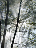 Forest Fire Vertical. Sunlight filters through the smoke as it rises among the trees in a forest on fire Royalty Free Stock Photos