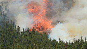 Forest fire with very large flames. Large flames and heavy smoke of a forest fire in the Canadian Rocky Mountains