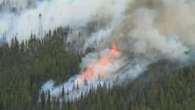 Forest fire with very large flames Stock Photography