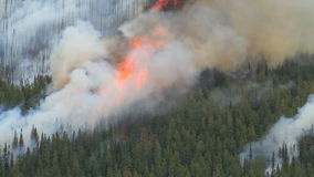 Forest fire with very large flames Stock Photos