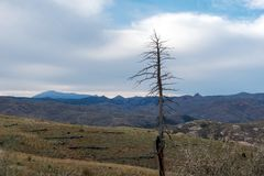 Forest fire victim tree with mountains royalty free stock photos