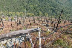 After Forest Fire. Vitosha Bulgaria national park stock photography