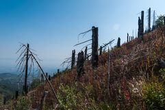 After Forest Fire. Vitosha Bulgaria national park stock image